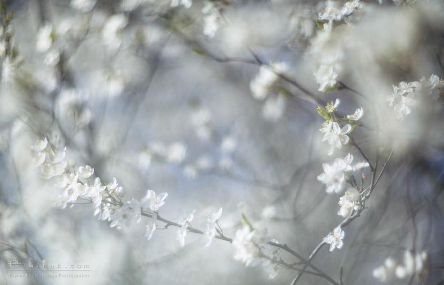 27 wiosna lato jesien natura liscie łąki