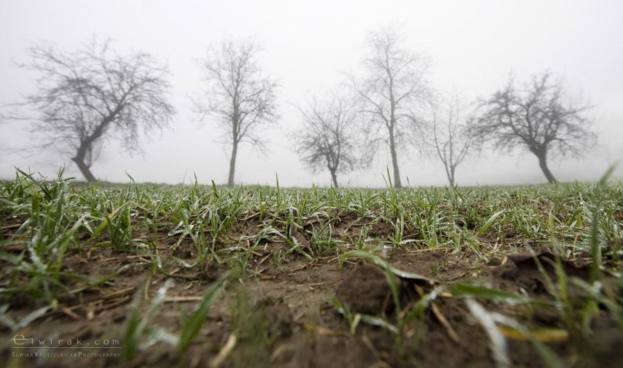 28 wiosna lato jesien natura liscie łąki