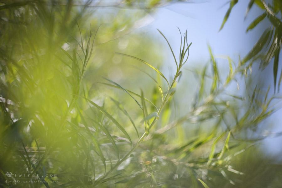 29 wiosna lato jesien natura liscie łąki
