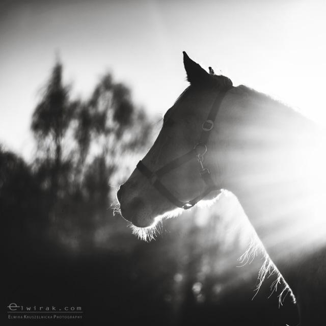 3 konie zdjecia artystyczne horses