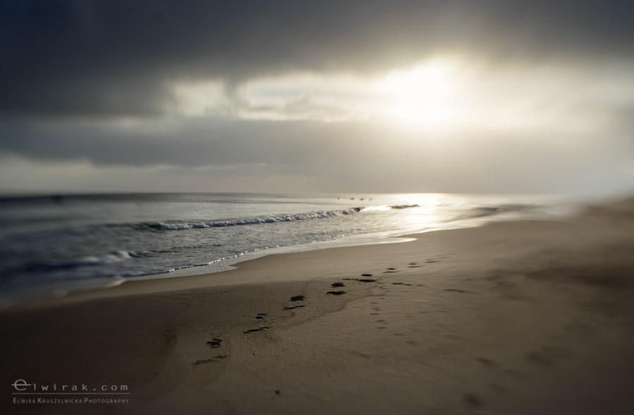 3 zdjęcia fotografie artystyczne nadmorskie trawy