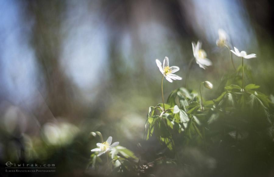 32 wiosna lato jesien natura liscie łąki