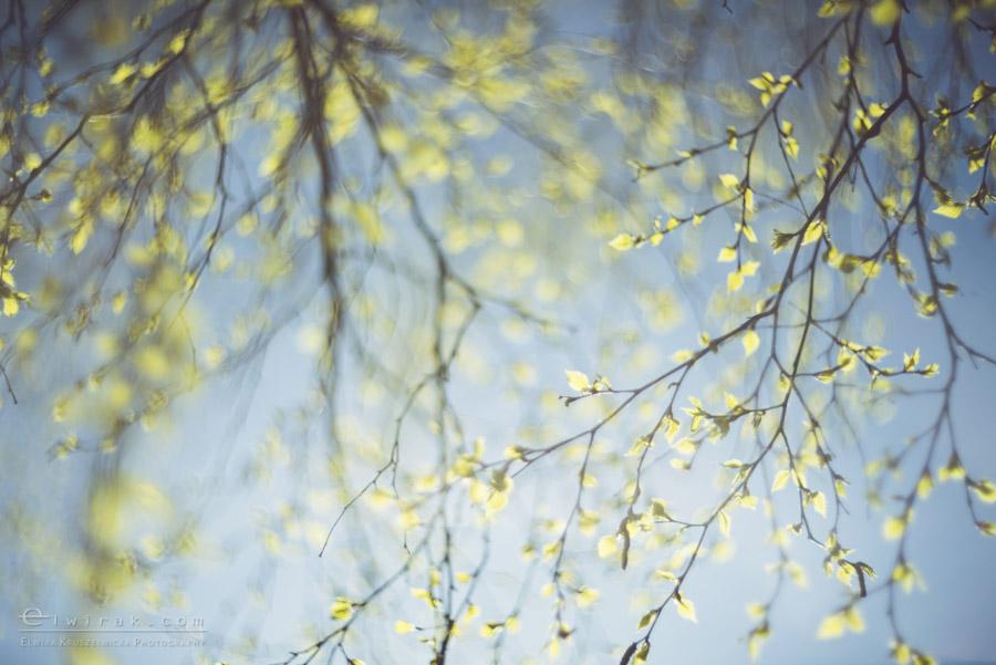 34 wiosna lato jesien natura liscie łąki