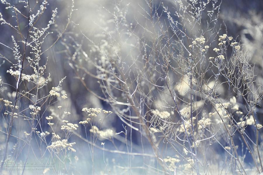 39 wiosna lato jesien natura liscie łąki
