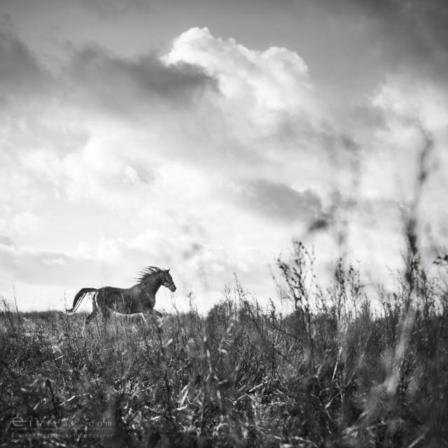 4 konie zdjecia artystyczne horses