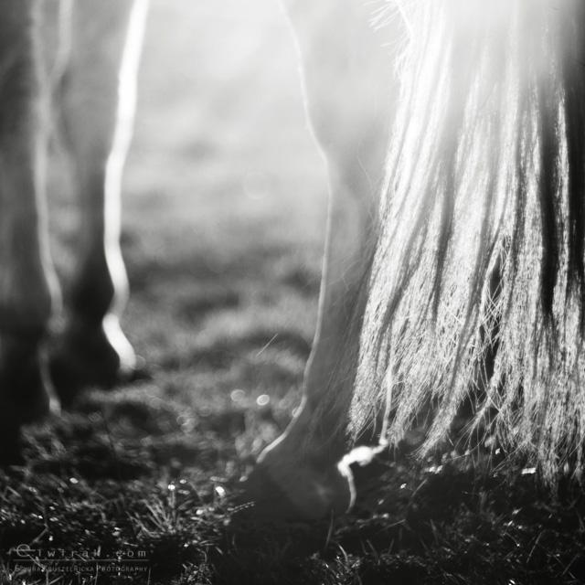 5 konie zdjecia artystyczne horses