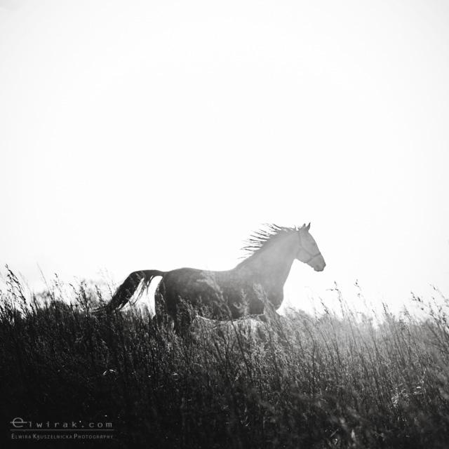 6 konie zdjecia artystyczne horses