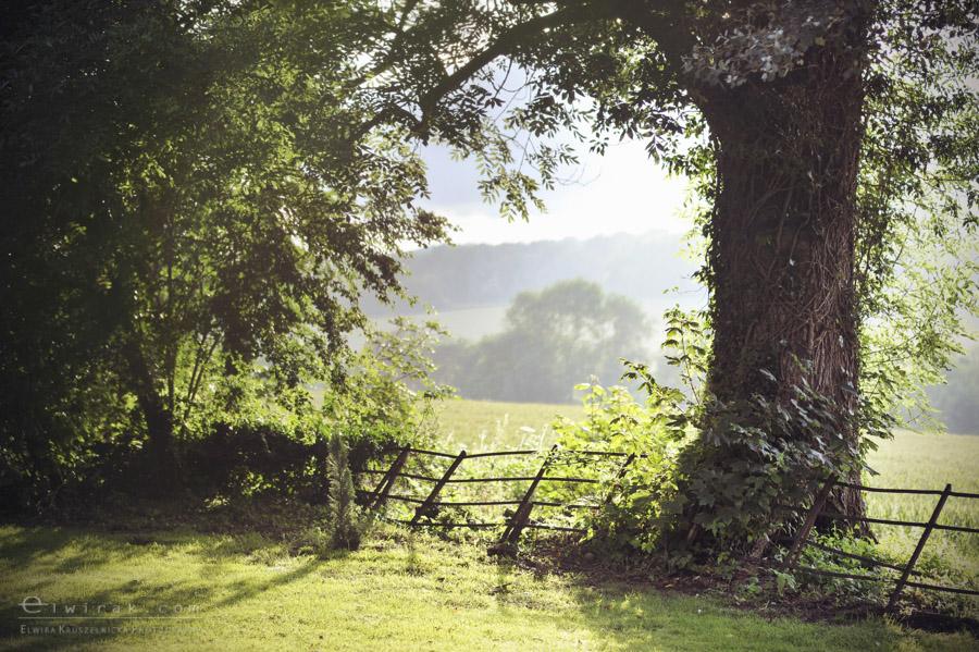 6 wiosna lato jesien natura liscie łąki