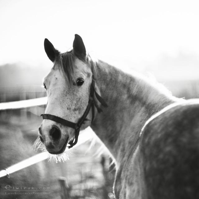 7 konie zdjecia artystyczne horses