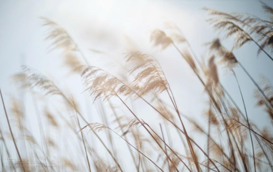 7 zdjęcia fotografie artystyczne nadmorskie trawy