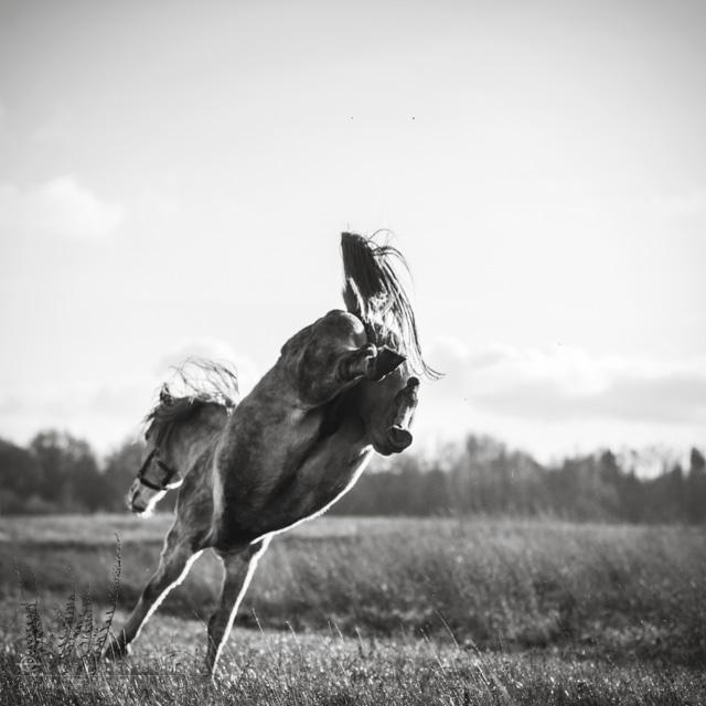 8 konie zdjecia artystyczne horses