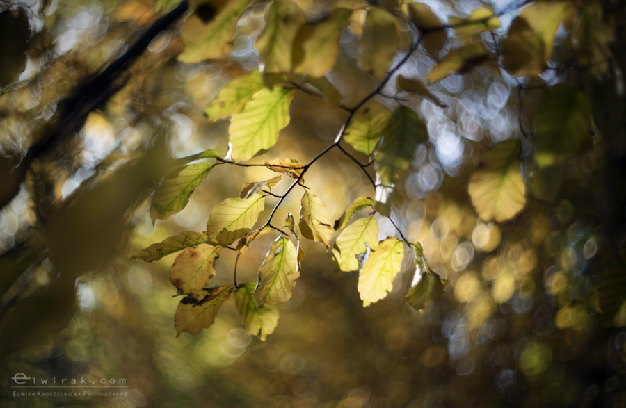 8 wiosna lato jesien natura liscie łąki