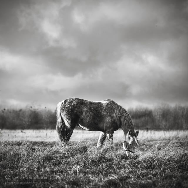 9 konie zdjecia artystyczne horses