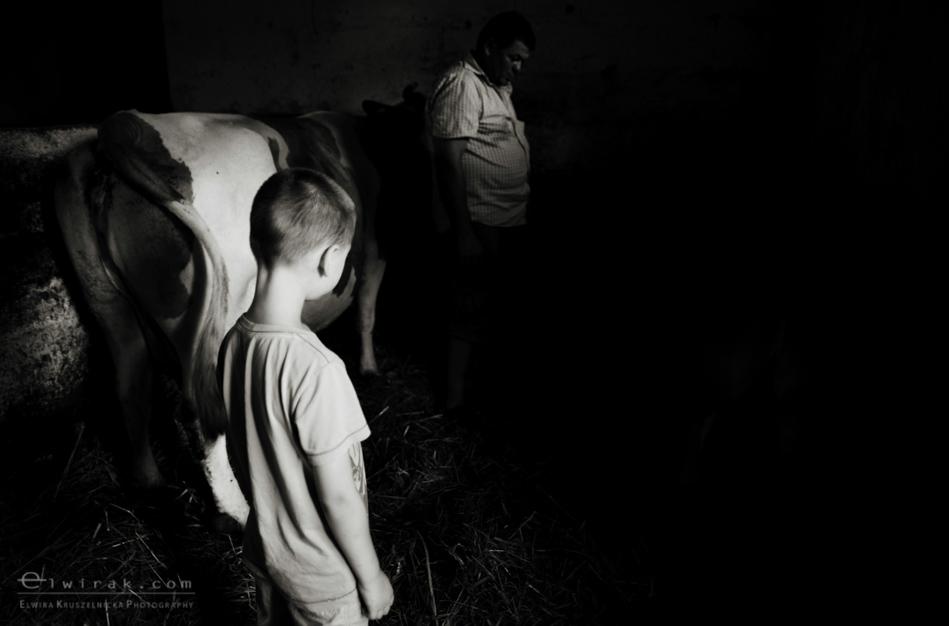 Dojenie_krowy_mleko_dziecko_fotoreportaz (1)-2