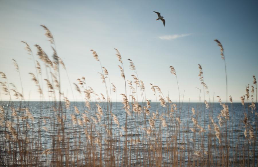 nadmorskie-sea-morze-baltyk-jurata-2