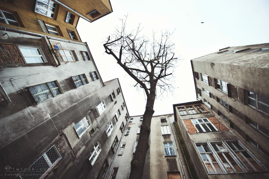 zwierzeta w miescie miasto street (2)
