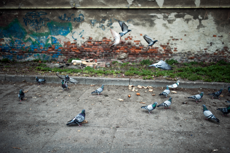 podworka miasto Trojmiasto (11)