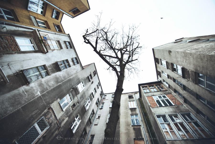 podworka miasto Trojmiasto (16)