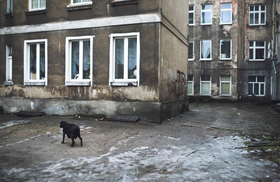 podworka miasto Trojmiasto (2)