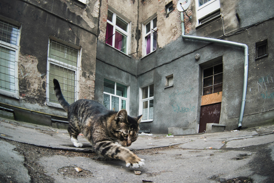 podworka miasto Trojmiasto (7)
