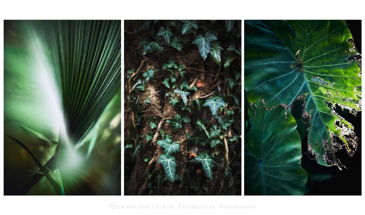 06_kolory_ziemi_zielen_dzungla_wydruki