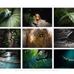 elwirak Przyklady fotografii (5)