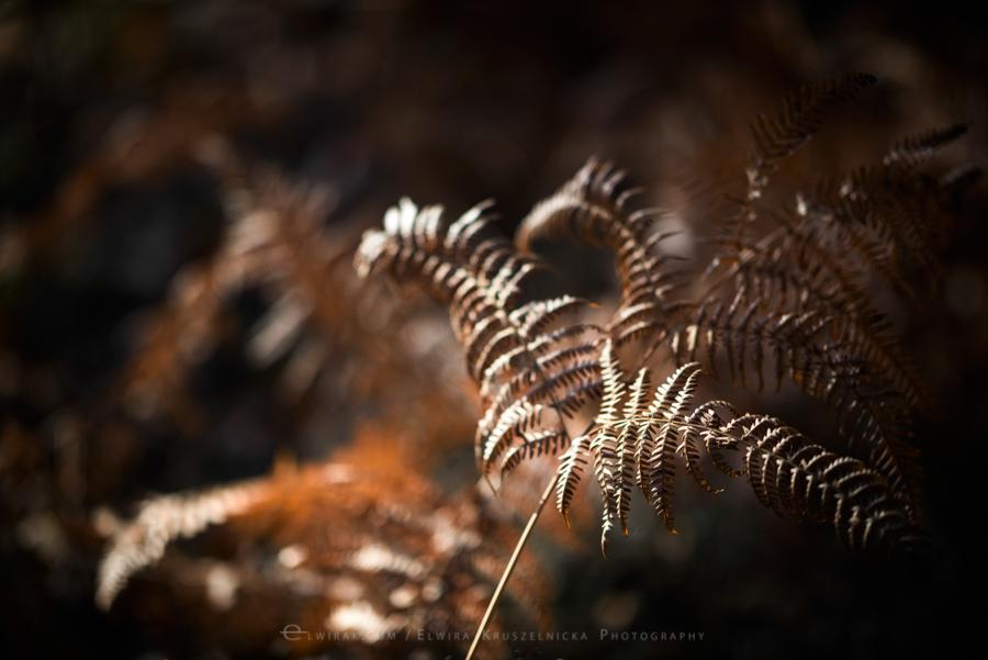 natura las jesień słońce (10)