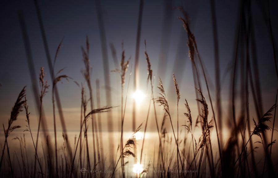 natura las jesień słońce (12)