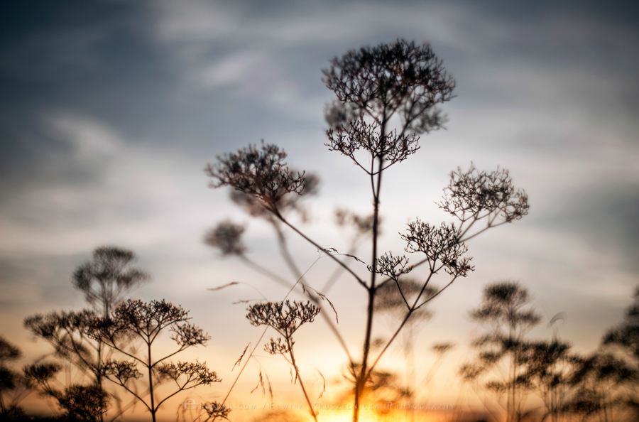 natura las jesień słońce (13)