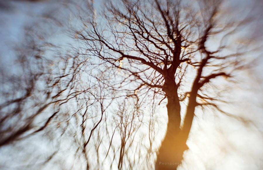 natura las jesień słońce (14)