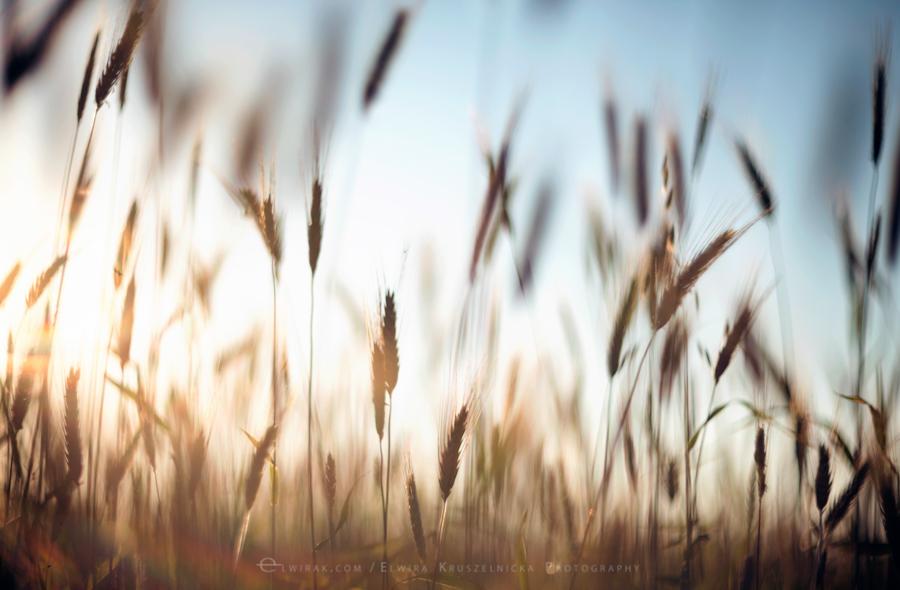 natura las jesień słońce (16)
