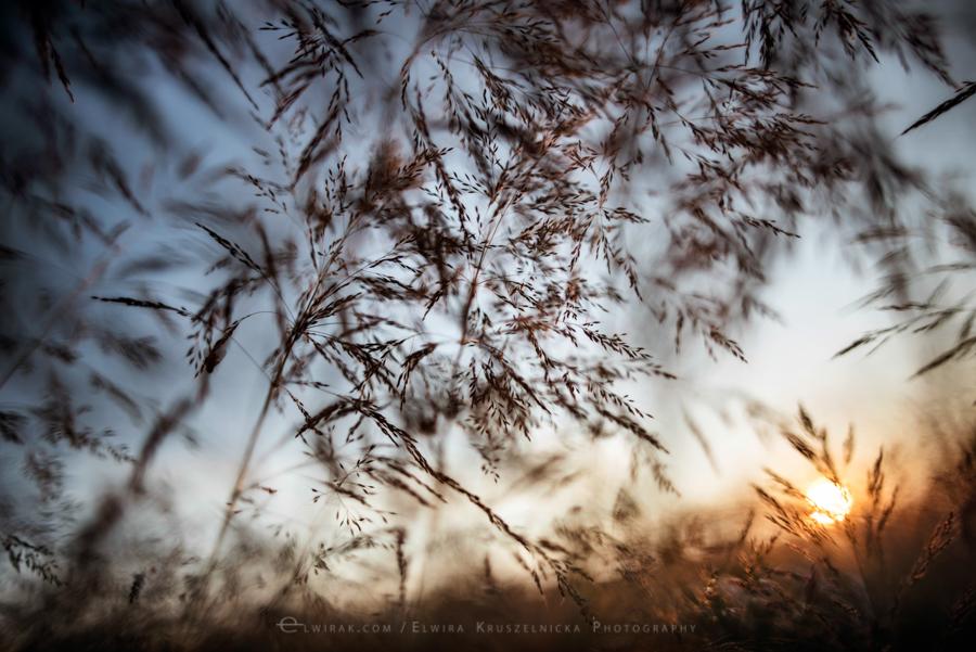 natura las jesień słońce (2)