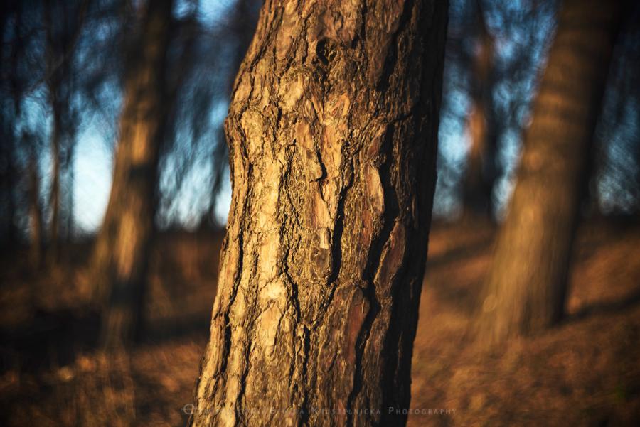 natura las jesień słońce (4)