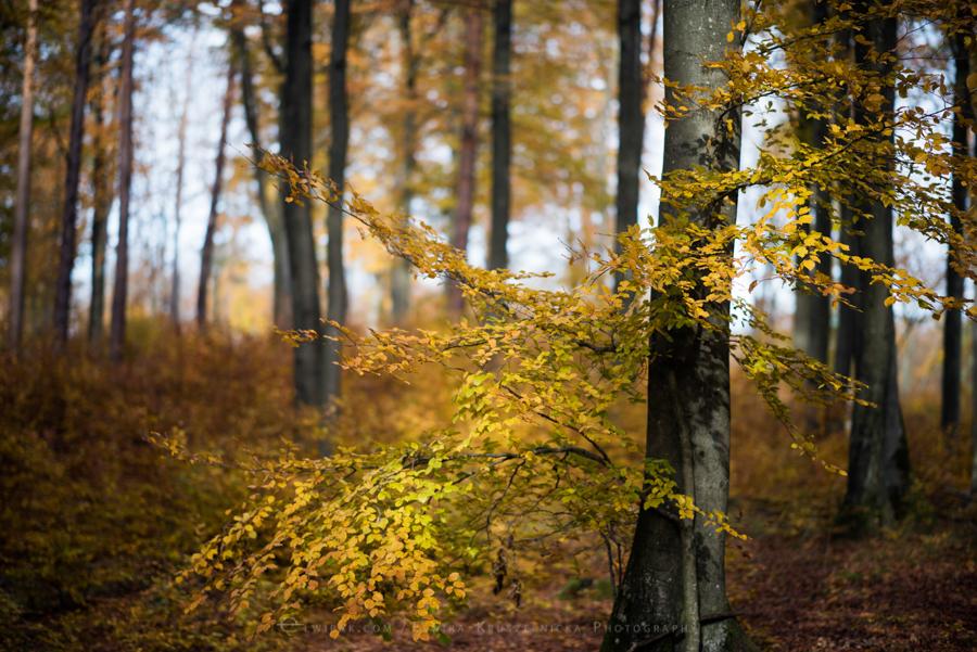 natura las jesień słońce (5)