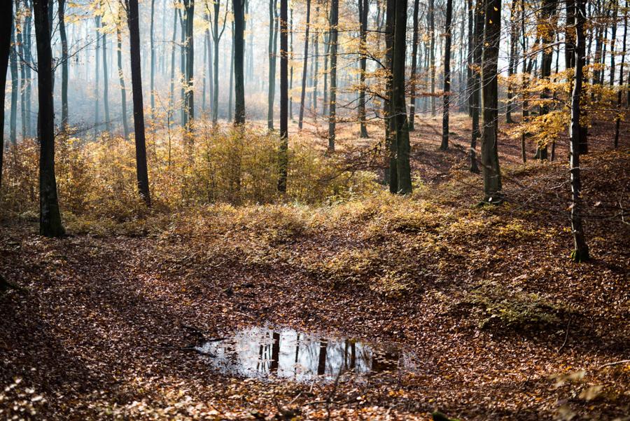 natura las jesień słońce (6)