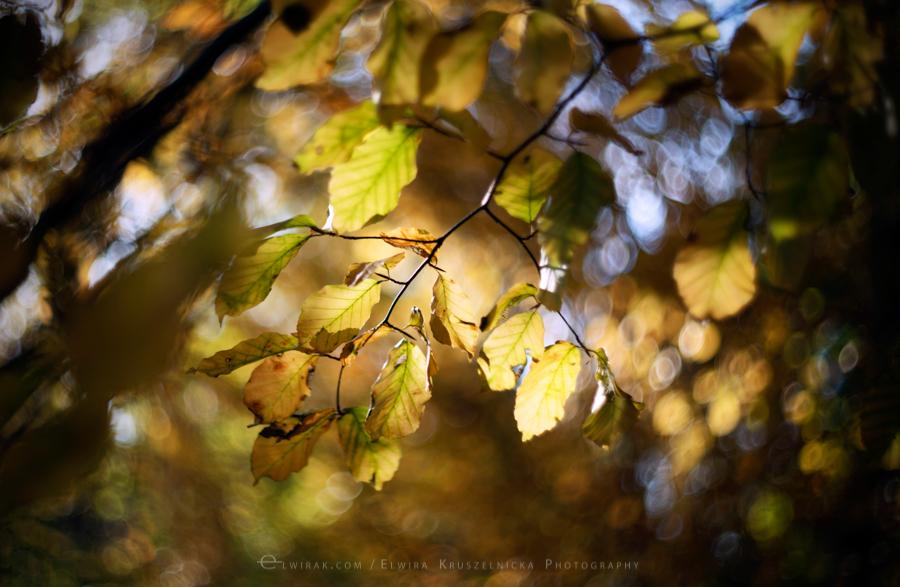natura las jesień słońce (7)